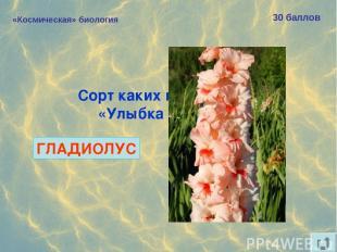 «Космическая» биология 30 баллов Сорт каких цветов назван «Улыбка Гагарина»? ГЛА