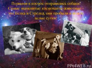 Первыми в космос отправились собаки! Самые знаменитые космонавты-животные – это