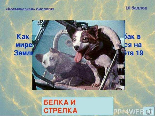 «Космическая» биология 10 баллов Как звали самых известных собак в мире, благополучно вернувшихся на Землю после космического полёта 19 августа 1960 года? БЕЛКА И СТРЕЛКА
