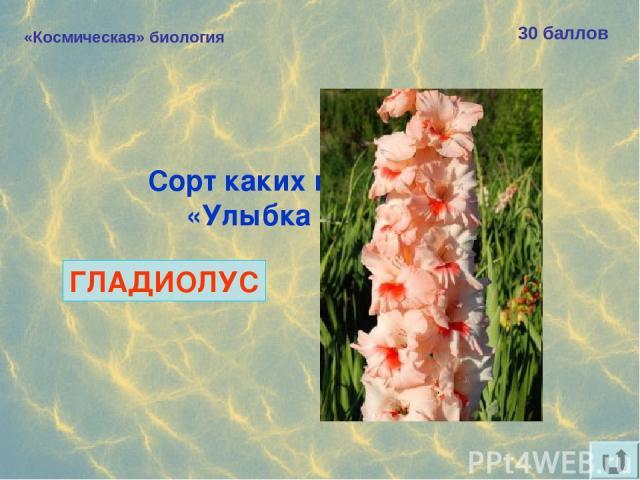 «Космическая» биология 30 баллов Сорт каких цветов назван «Улыбка Гагарина»? ГЛАДИОЛУС
