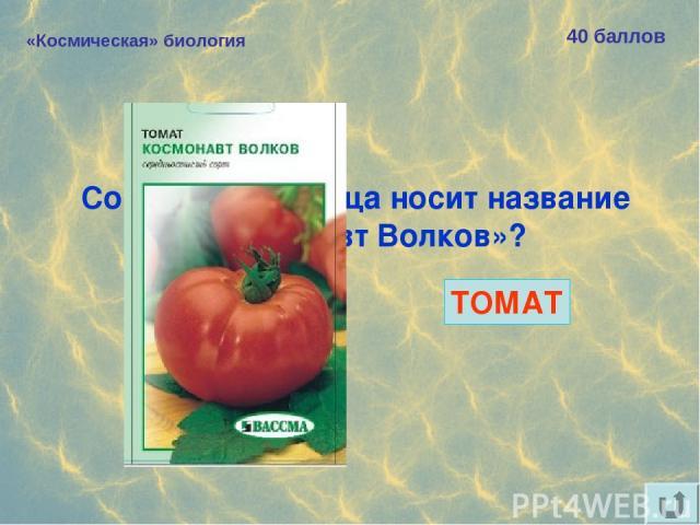 «Космическая» биология 40 баллов Сорт какого овоща носит название «Космонавт Волков»? ТОМАТ