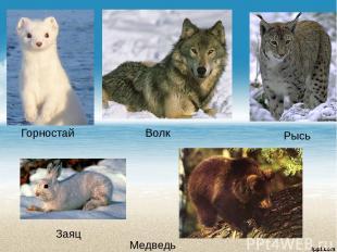 Горностай Волк Заяц Медведь Рысь