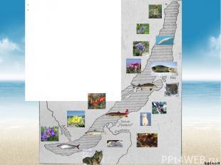 Местонахождение озера БайкалРоссия Особенности озера Байкал: длина636 м, глубина