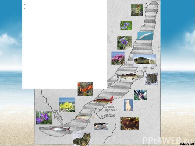 Местонахождение озера БайкалРоссия Особенности озера Байкал: длина636 м, глубина1642 м, всей пресной воды1/5 часть, возрастболее 25 миллионов лет. Озеро Байкал: самоеглубокоеидревнеена Земле, самоечистое на Земле Рек впадает300 рек , Селенга Вытекае…
