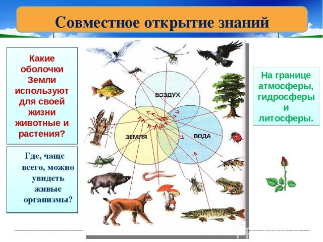 Какие оболочки Земли используют для своей жизни животные и растения? Где, чаще всего, можно увидеть живые организмы? На границе атмосферы, гидросферы и литосферы. Совместное открытие знаний