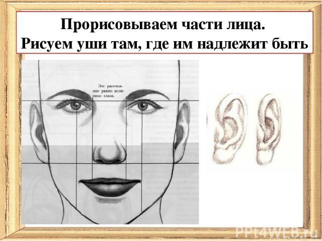 Прорисовываем части лица. Рисуем уши там, где им надлежит быть