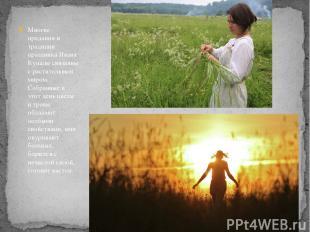 Многие предания и традиции праздника Ивана Купалысвязанны с растительным миром.
