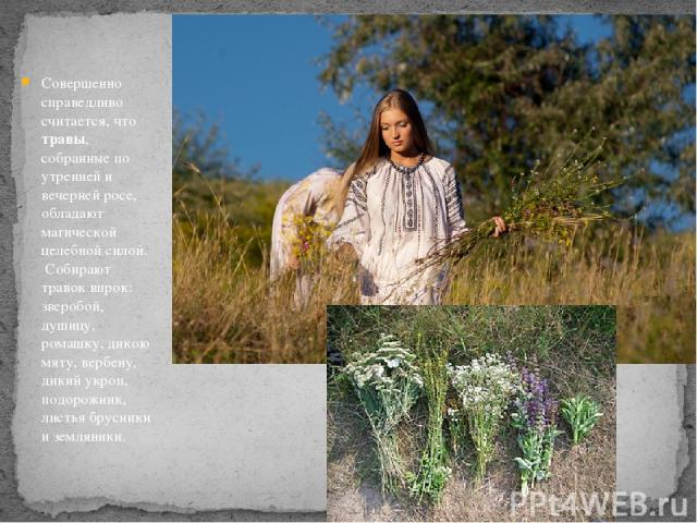 Совершенно справедливо считается, что травы, собранные по утренней и вечерней росе, обладают магической целебной силой. Собирают травок впрок: зверобой, душицу, ромашку, дикою мяту, вербену, дикий укроп, подорожник, листья брусники и земляники.