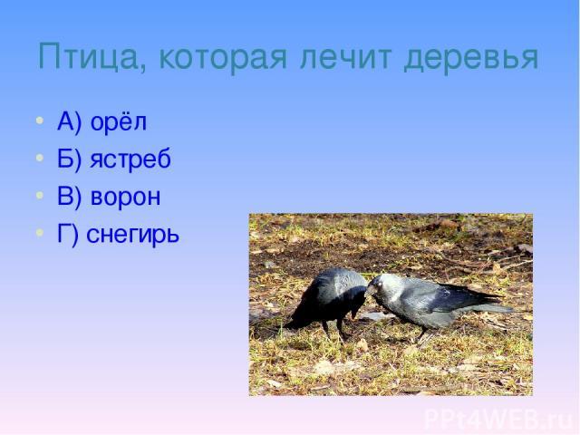 Птица, которая лечит деревья А) орёл Б) ястреб В) ворон Г) снегирь
