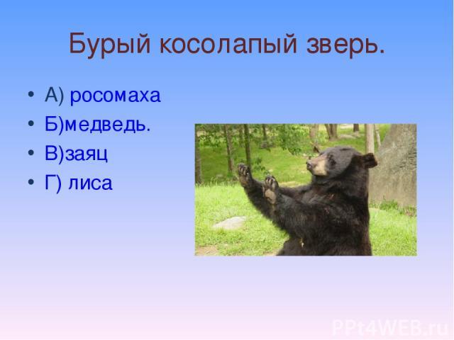 Бурый косолапый зверь. А) росомаха Б)медведь. В)заяц Г) лиса