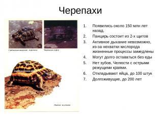 Черепахи Появились около 150 млн лет назад. Панцирь состоит из 2-х щитов Активно