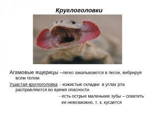 Круглоголовки Агамовые ящерицы –легко закапываются в песок, вибрируя всем телом
