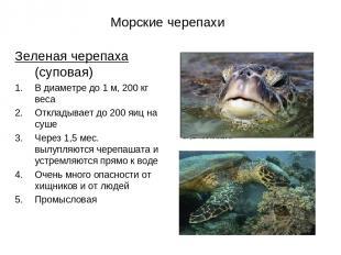 Морские черепахи Зеленая черепаха (суповая) В диаметре до 1 м, 200 кг веса Откла