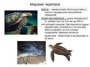 Морские черепахи Бисса – промысловая. Использую мясо и щитки с панциря для изгот