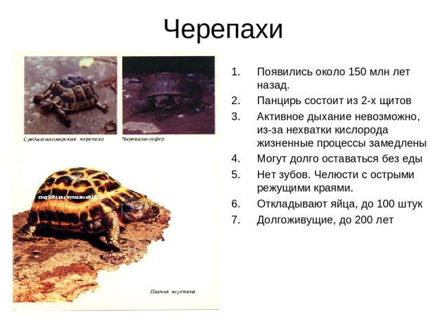 Черепахи Появились около 150 млн лет назад. Панцирь состоит из 2-х щитов Активное дыхание невозможно, из-за нехватки кислорода жизненные процессы замедлены Могут долго оставаться без еды Нет зубов. Челюсти с острыми режущими краями. Откладывают яйца…