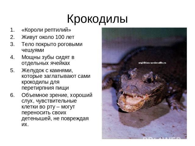 Крокодилы «Короли рептилий» Живут около 100 лет Тело покрыто роговыми чешуями Мощны зубы сидят в отдельных ячейках Желудок с камнями, которые заглатывают сами крокодилы для перетирпния пищи Объемное зрение, хороший слух, чувствительные клетки во рту…