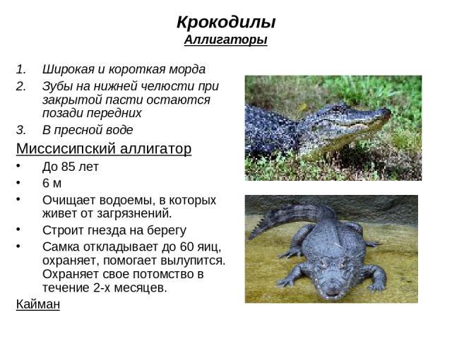 Крокодилы Аллигаторы Широкая и короткая морда Зубы на нижней челюсти при закрытой пасти остаются позади передних В пресной воде Миссисипский аллигатор До 85 лет 6 м Очищает водоемы, в которых живет от загрязнений. Строит гнезда на берегу Самка откла…