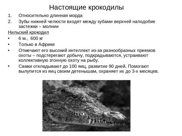 Настоящие крокодилы Относительно длинная морда Зубы нижней челюсти входят между зубами верхней наподобие застежки – молнии Нильский крокодил 6 м., 600 кг Только в Африке Отмечают его высокий интеллект из-за разнообразных приемов охоты – подстерегают…