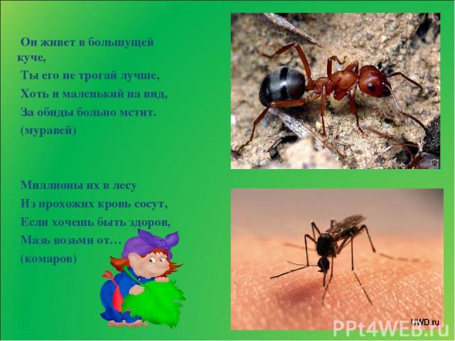 Он живет в большущей куче, Ты его не трогай лучше, Хоть и маленький на вид, За обиды больно мстит. (муравей) Миллионы их в лесу Из прохожих кровь сосут, Если хочешь быть здоров, Мазь возьми от… (комаров)