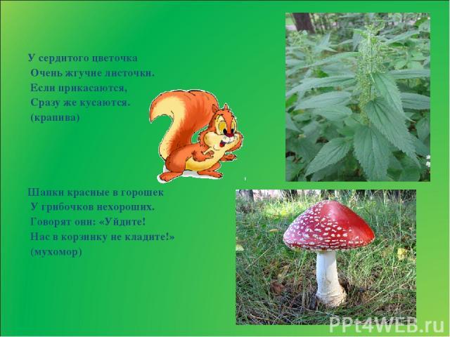 У сердитого цветочка Очень жгучие листочки. Если прикасаются, Сразу же кусаются. (крапива) Шапки красные в горошек У грибочков нехороших. Говорят они: «Уйдите! Нас в корзинку не кладите!» (мухомор)
