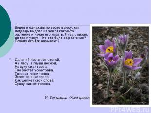Видел я однажды по весне в лесу, как медведь выдрал из земли какое-то растение и