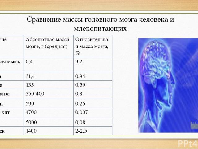 Сравнение массы головного мозга человека и млекопитающих Название Абсолютная масса мозге, г (средняя) Относительная масса мозга, % Домовая мышь 0,4 3,2 Кошка 31,4 0,94 Собака 135 0,59 Шимпанзе 350-400 0,8 Лошадь 590 0,25 Синий кит 4700 0,007 Слон 50…