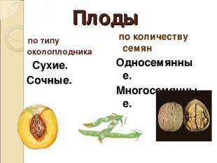 Плоды по типу околоплодника Сухие. Сочные. по количеству семян Односемянные. Мно