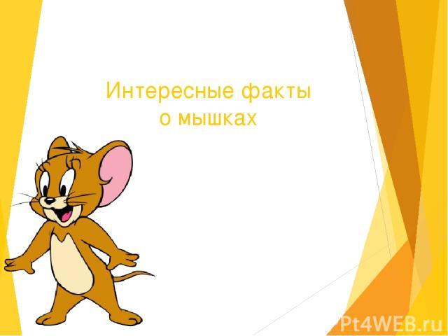 Интересные факты о мышках