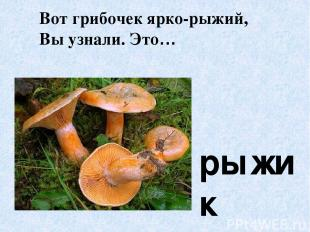 Вот грибочек ярко-рыжий, Вы узнали. Это… рыжик