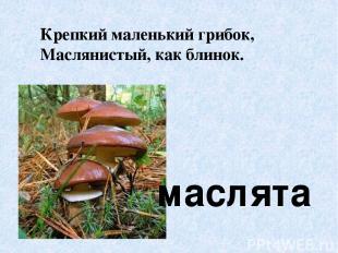 маслята Крепкий маленький грибок, Маслянистый, как блинок.