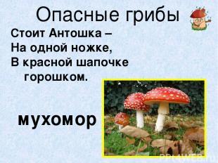 Опасные грибы Стоит Антошка – На одной ножке, В красной шапочке горошком. мухомо