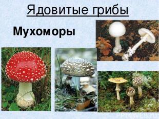 Ядовитые грибы Мухоморы