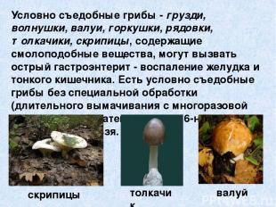 Условно съедобные грибы - грузди, волнушки, валуи, горкушки, рядовки, толкачики,