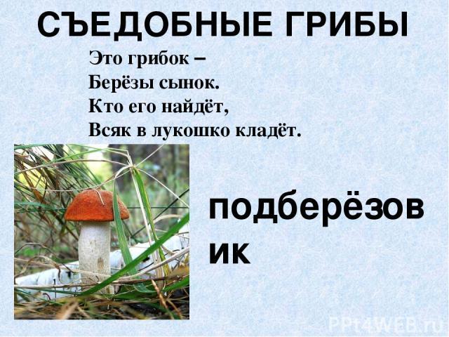 СЪЕДОБНЫЕ ГРИБЫ подберёзовик Это грибок – Берёзы сынок. Кто его найдёт, Всяк в лукошко кладёт.