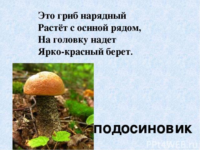 Это гриб нарядный Растёт с осиной рядом, На головку надет Ярко-красный берет. подосиновик