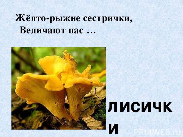 Жёлто-рыжие сестрички, Величают нас … лисички