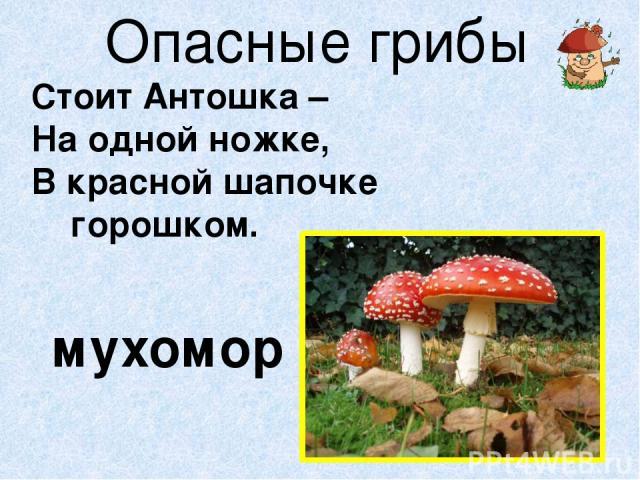Опасные грибы Стоит Антошка – На одной ножке, В красной шапочке горошком. мухомор