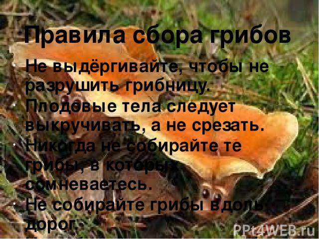 Не выдёргивайте, чтобы не разрушить грибницу. Плодовые тела следует выкручивать, а не срезать. Никогда не собирайте те грибы, в которых сомневаетесь. Не собирайте грибы вдоль дорог. Не собирайте старые грибы. Правила сбора грибов