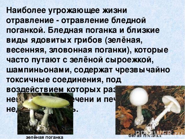 Наиболее угрожающее жизни отравление - отравление бледной поганкой. Бледная поганка и близкие виды ядовитых грибов (зелёная, весенняя, зловонная поганки), которые часто путают с зелёной сыроежкой, шампиньонами, содержат чрезвычайно токсичные соедине…