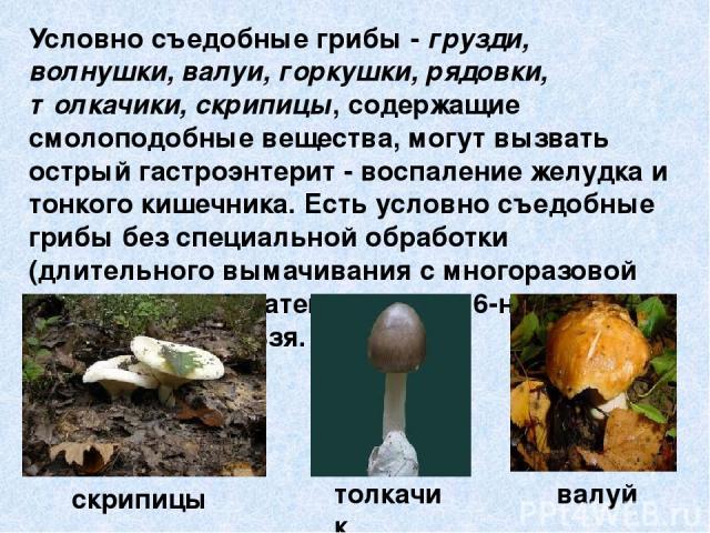Условно съедобные грибы - грузди, волнушки, валуи, горкушки, рядовки, толкачики, скрипицы, содержащие смолоподобные вещества, могут вызвать острый гастроэнтерит - воспаление желудка и тонкого кишечника. Есть условно съедобные грибы без специальной о…