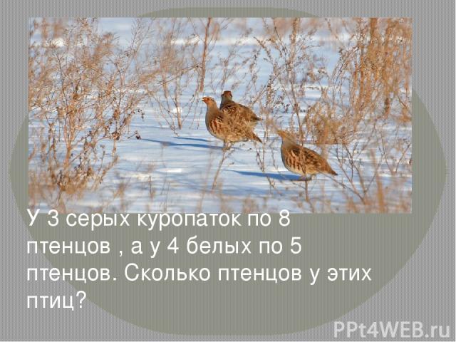 У 3 серых куропаток по 8 птенцов , а у 4 белых по 5 птенцов. Сколько птенцов у этих птиц?