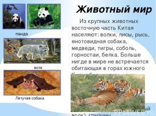 Животный мир Из крупных животных восточную часть Китая населяют: волки, лисы, ры