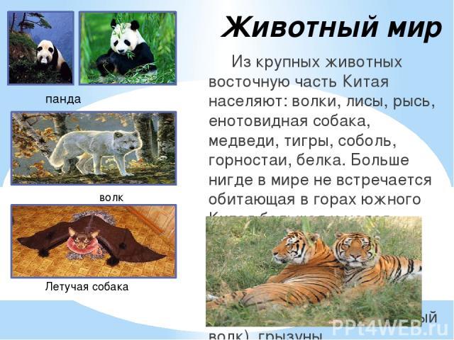 Животный мир Из крупных животных восточную часть Китая населяют: волки, лисы, рысь, енотовидная собака, медведи, тигры, соболь, горностаи, белка. Больше нигде в мире не встречается обитающая в горах южного Китая большая и малая панда. На Тибете обит…