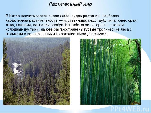 В Китае насчитывается около 25000 видов растений. Наиболее характерная растительность — лиственница, кедр, дуб, липа, клен, орех, лавр, камелия, магнолия бамбук. На тибетском нагорье — степи и холодные пустыни, на юге распространены густые тропическ…
