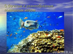 С богатым и разнообразным подводным миром