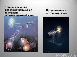 Органы свечения животных испускают холодный, люминесцентный свет Искусственные и
