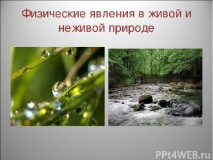 Физические явления в живой и неживой природе