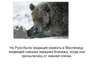 На Руси была традиция кормить в Масленицу медведей самыми первыми блинами, когда