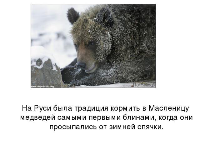 На Руси была традиция кормить в Масленицу медведей самыми первыми блинами, когда они просыпались от зимней спячки.