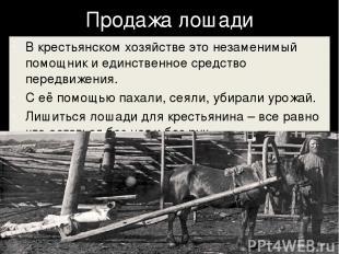 Продажа лошади В крестьянском хозяйстве это незаменимый помощник и единственное